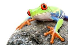 青蛙查出的岩石 免版税图库摄影