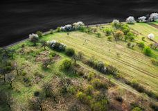 Сады весны около коричневого поля, вида с воздуха Стоковая Фотография