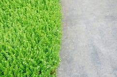 绿色植物和水泥背景 免版税库存图片