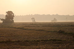 Луга покрыты большим деревом Стоковое Изображение RF