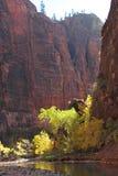 秋天颜色在维尔京河的峡谷在锡安国家公园 免版税库存照片
