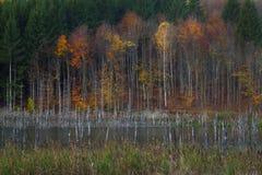 在湖附近的秋天颜色 库存照片