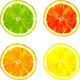 画由水彩的切片柑橘水果 库存图片
