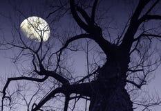 月亮 图库摄影