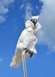 Попугай какаду Стоковое Изображение RF