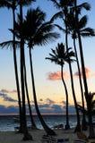 热带的日出 免版税图库摄影