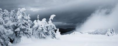 神秘的雾和冷杉木在冬天山 全景 免版税库存照片
