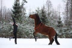 Лошадь залива девушки подростка командующая, который нужно поднять Стоковое Фото