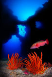 特内里费岛海岸的潜水者  图库摄影