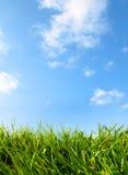 蓝色明亮的草天空 库存照片