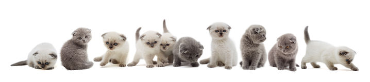 Σύνολο γατακιών Στοκ Εικόνες