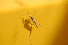 蚊 免版税图库摄影