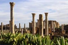 罗马的列 免版税库存图片