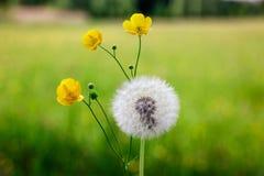 在草甸的春天花 图库摄影
