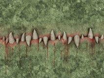 犬齿 免版税库存照片