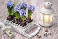与蓝色风信花花的复活节装饰 免版税图库摄影
