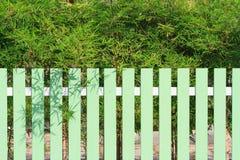 绿色篱芭和竹子树 库存照片