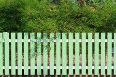 绿色篱芭和竹子树 图库摄影