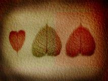 текстурированные листья иллюстрации Стоковое Изображение