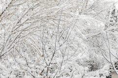 在冬时的用白色雪报道的树,分支和冰 库存照片