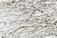 зима дня совершенная Стоковые Фото