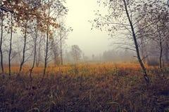 Красочный и одичалый ландшафт Стоковая Фотография RF