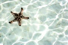 水下活的海星 免版税库存图片