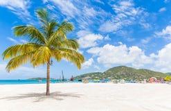 在圣马丁海滩的棕榈树 免版税库存照片