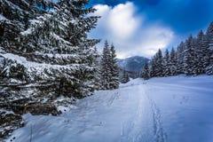 雪加盖了在山行迹的森林道路 库存图片