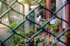 Αγνότητα στο κλουβί Στοκ φωτογραφίες με δικαίωμα ελεύθερης χρήσης