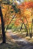 秋天风景-道路在一个混杂的森林里 免版税图库摄影