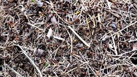 Μυρμηγκοφωλιά στο δάσος απόθεμα βίντεο