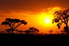 非洲日落 免版税库存照片