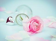 与桃红色玫瑰的情人节在蓝色背景的卡片和心脏 库存照片