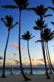 热带的日出 免版税库存照片