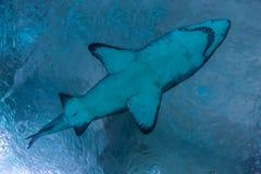 海的掠食性动物 免版税库存照片