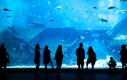 大水族馆在新加坡 免版税库存图片