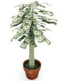 απομονωμένο λευκό δέντρων χρημάτων Στοκ Φωτογραφίες