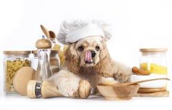 在厨师的帽子的小狗 免版税图库摄影