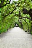 тоннель сада беседки Стоковые Фото