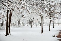 日理想的冬天 免版税库存图片