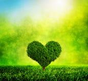 生长在绿草的心形的树 爱 免版税库存照片