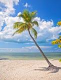 在一个热带海滩天堂的夏天在佛罗里达 免版税库存图片