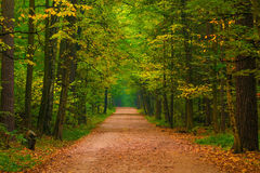 宽道路在一个美丽的森林里 免版税库存图片