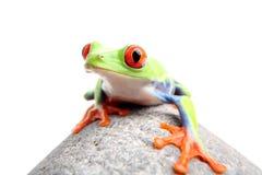 青蛙查出的岩石 库存照片