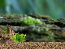 завод предпосылки аквариума трясет под водой Стоковое фото RF
