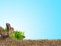 завод предпосылки аквариума трясет под водой Стоковое Фото