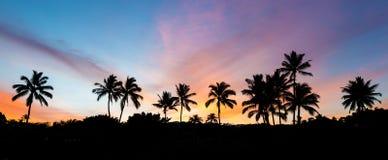 热带的日出 库存图片
