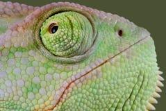 变色蜥蜴接近  免版税库存照片