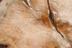сляб дуба Стоковые Изображения